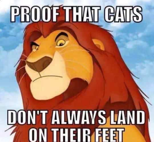 47-best-disney-memes-lion-king-2