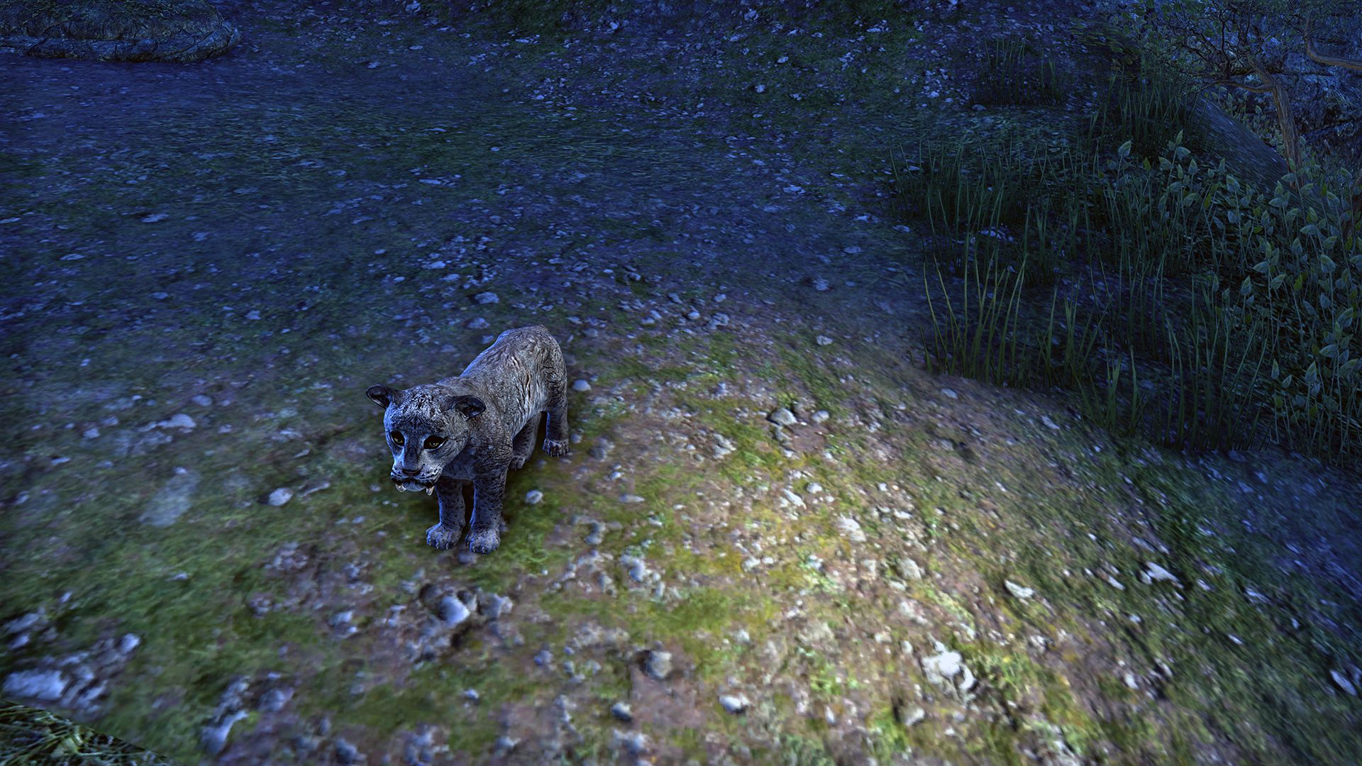 Sabre Cat Cub, Legendary Non-Combat Pet, Scalecaller Crown Crate (image by Zenimax Online)