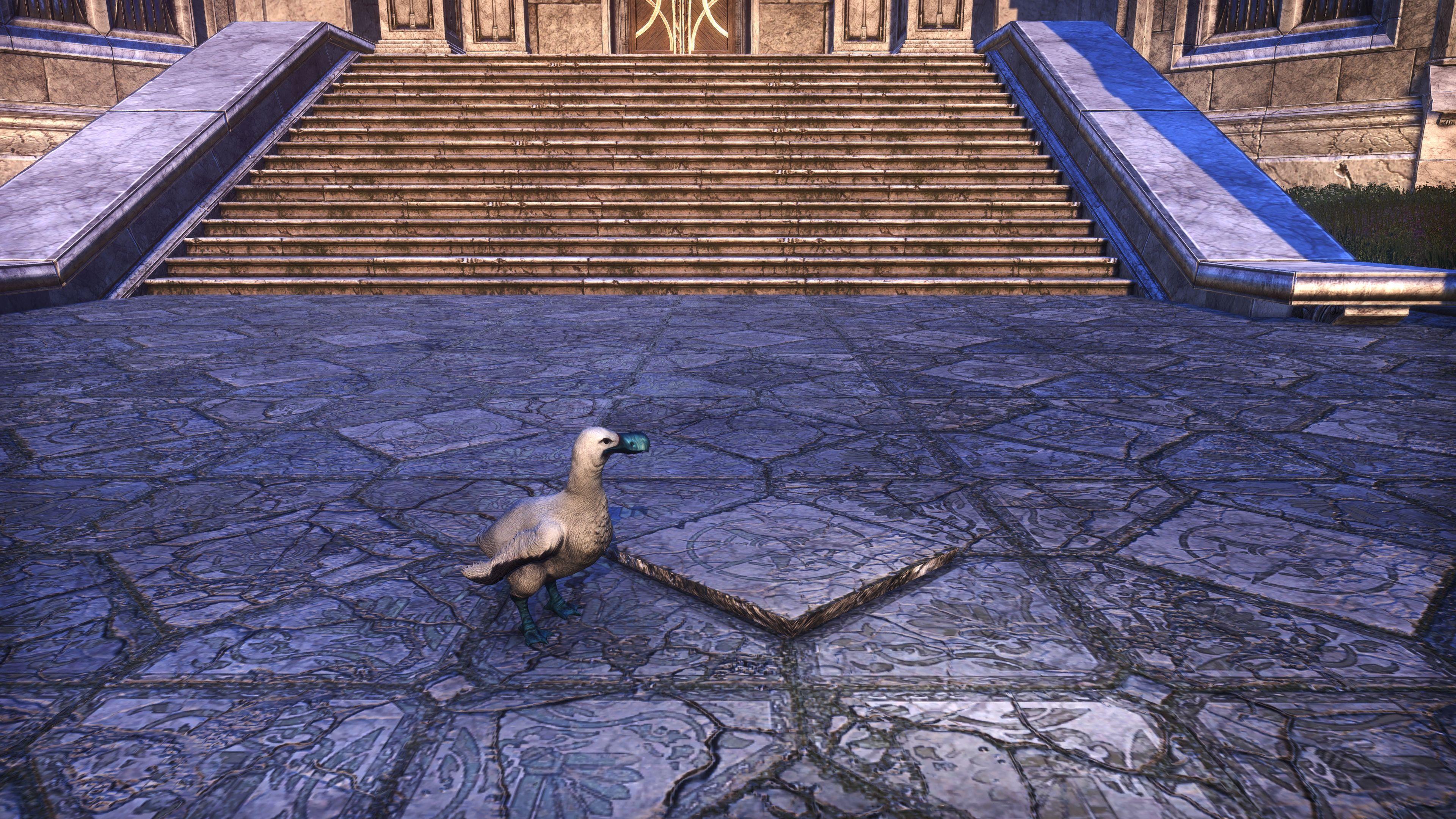 """Atmoran Chub Loon """"Doom Loon"""" (Non-Combat Pet), Psijic Vault Crate, The Elder Scrolls Online"""