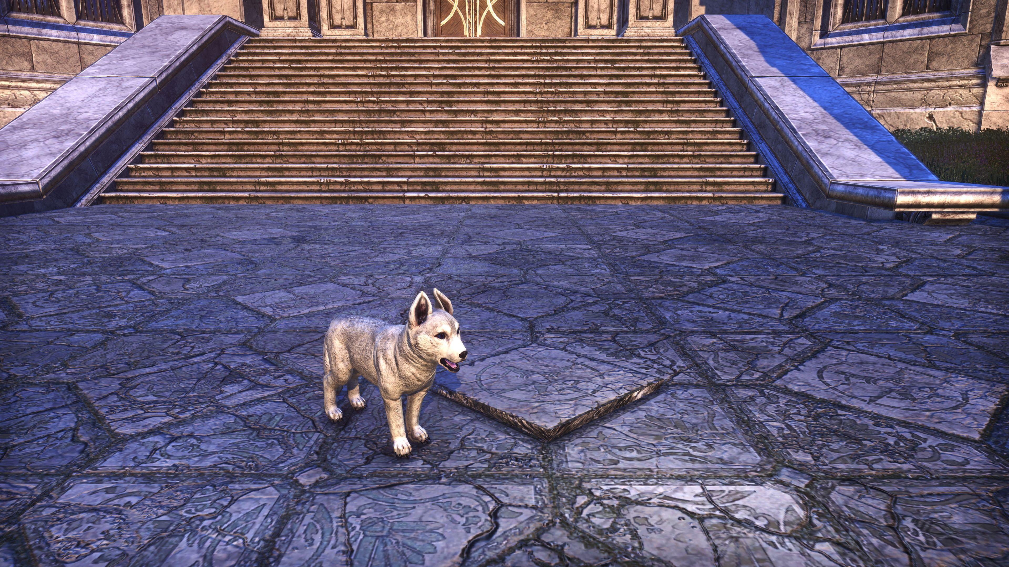 """Karth Winter Pup """"Snowdrift"""" (Non-Combat Pet), Psijic Vault Crate, The Elder Scrolls Online"""