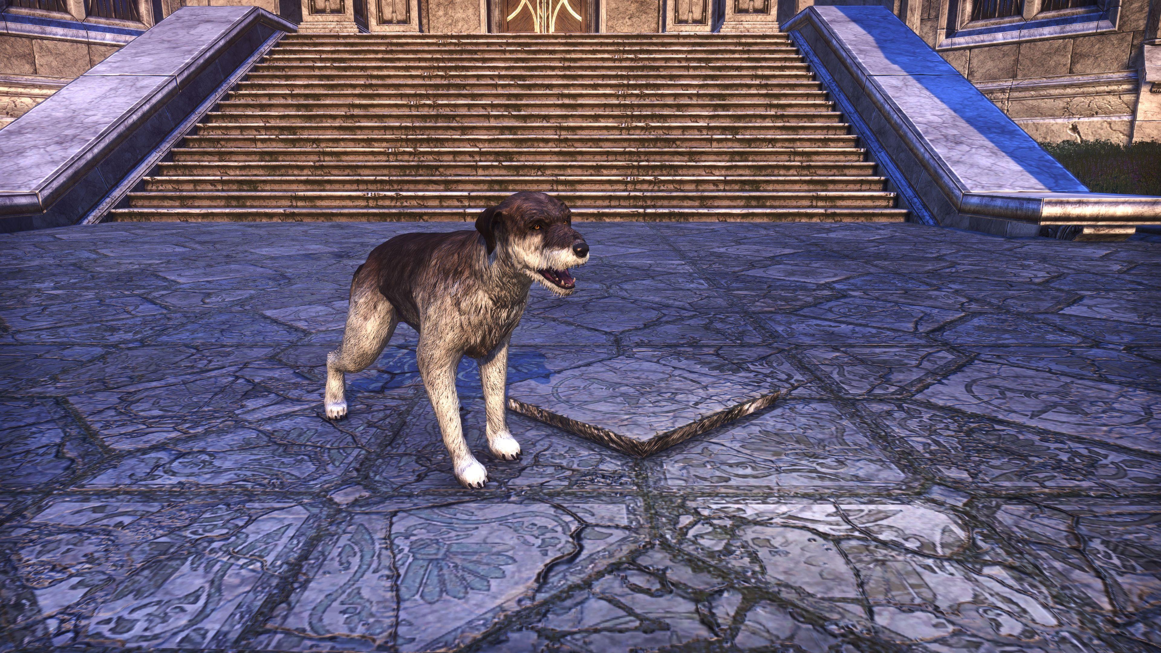 "Winterhold Wolfhound ""Drift Dog"" (Non-Combat Pet), Psijic Vault Crate, The Elder Scrolls Online"
