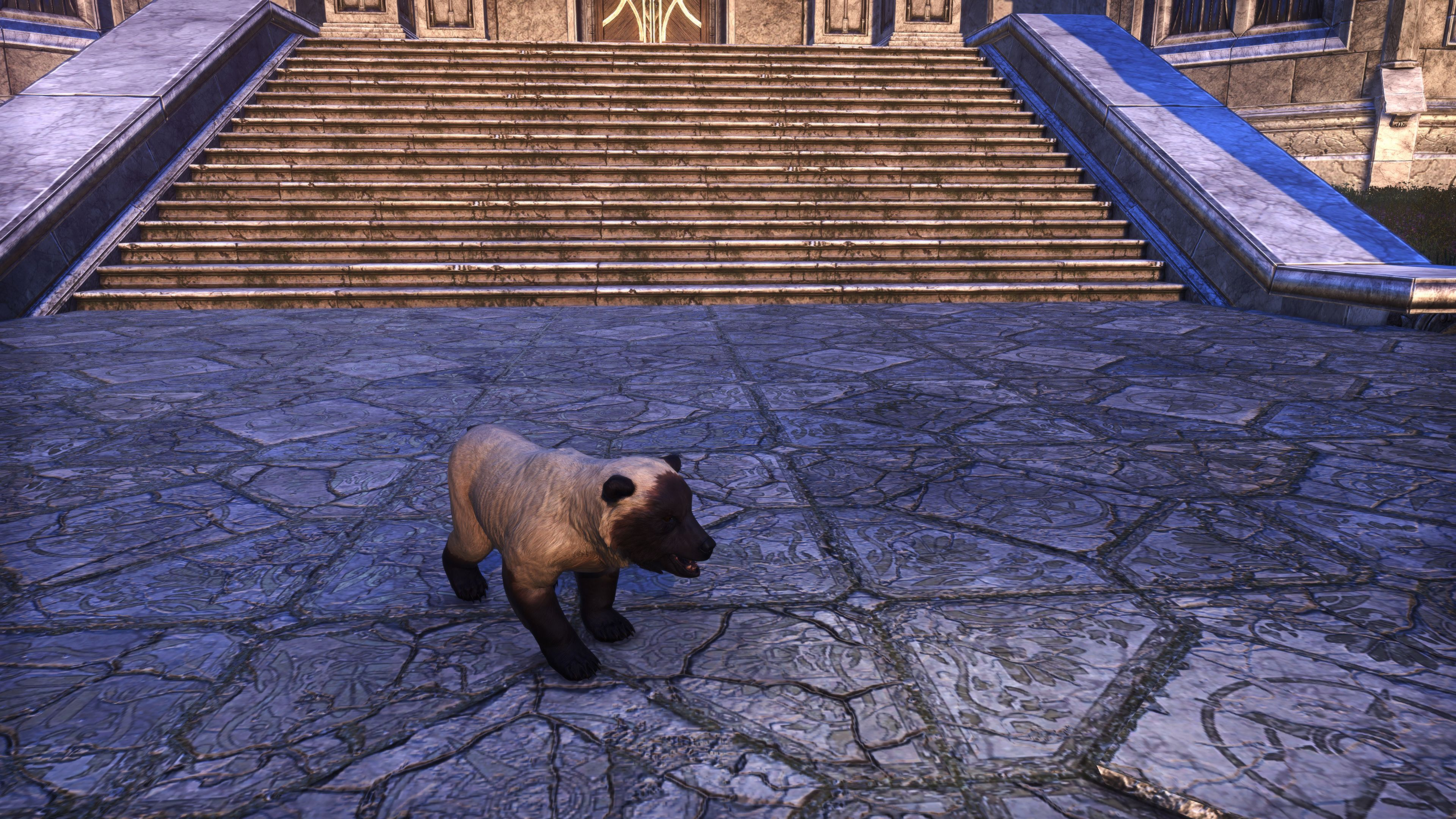"Atmoran Snow Bear Cub ""Li'l Avalanche"" (Non-Combat Pet), Hollowjack Crown Crate, The Elder Scrolls Online"