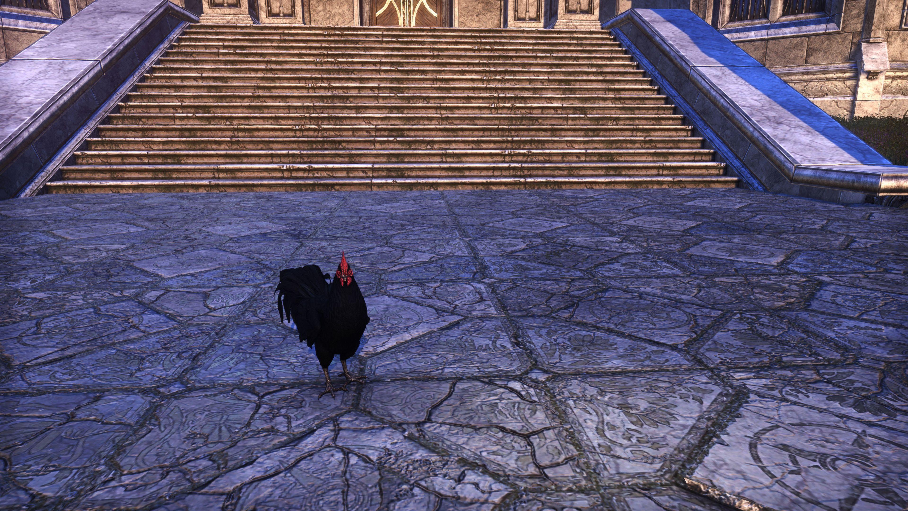 "Daemon Cockerel ""Spurs"" (Non-Combat Pet), Hollowjack Crown Crate, The Elder Scrolls Online"