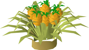 Pineapple Tree, Old School Runescape